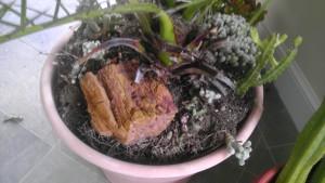 Palm Soil
