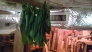 Drying Tobacco 1