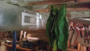 Drying Tobacco 2